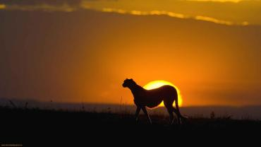 Sunset-in-wild-Africa-1