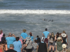 People watching rehabilitated penguins returned to the sea.