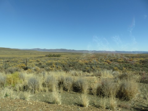 Typical Karoo plain
