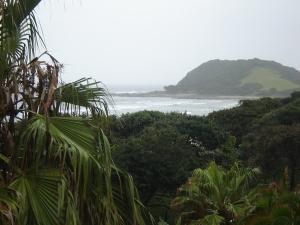 Vegetation at Morgan Bay