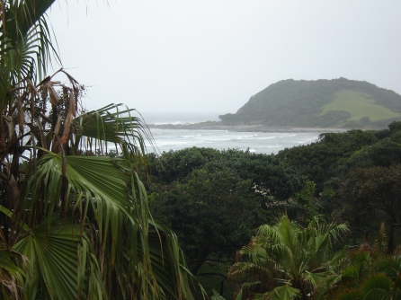 Vegetation at Morgan Bay
